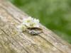 pierścionek-zaręczynowy-fotograf-bapacifoto